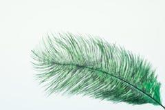 Pluma verde de la avestruz Imagen de archivo