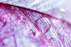 Pluma violeta con el descenso transparente grande del rocío del agua stock de ilustración