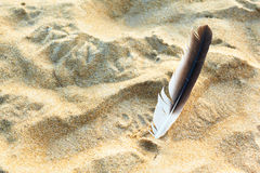 Pluma y arena Fotos de archivo libres de regalías