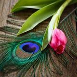 Pluma y tulipán de los pavos reales en tarjeta de madera Fotografía de archivo libre de regalías