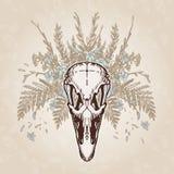 Plumage âgé par vintage de crâne d'autruche Image libre de droits