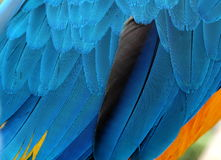 plumage photo stock