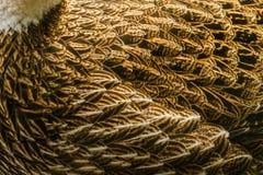 plumage royaltyfri fotografi