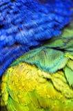 plumage photographie stock