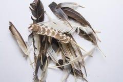 plumage fotografering för bildbyråer