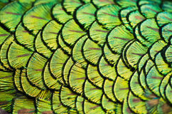 Plumage As A Natural Background Royalty Free Stock Photos