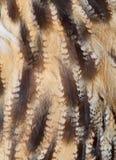 Plumage background. Of eagle-owl closeup Stock Image