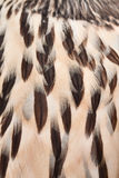 Plumage background Stock Photos