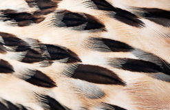 Plumage background Stock Images