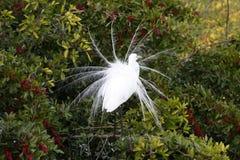 Plumage blanc d'oiseau d'eau de la Floride Photo libre de droits