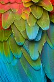 Plumage coloré de Macaw Photos stock