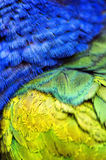 Plumage Stock Photography