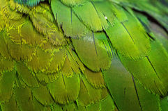 Plumage Royalty Free Stock Photo