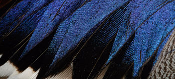 Plumage of a duck. The fragment plumage of a duck Royalty Free Stock Photos
