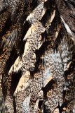 Plumage of a European Nightjar Stock Photography