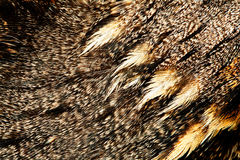 Plumage of a European Nightjar Stock Photos