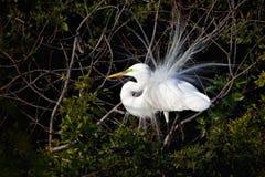 plumage för fågelavelegret arkivfoton
