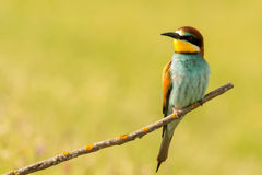 Plumage intéressant été perché petit par oiseau photo stock