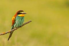Plumage intéressant été perché petit par oiseau photographie stock libre de droits