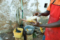 Plumage of old-style chicken. With hot water and hand in a restaurant in Voi in Kenya Stock Image