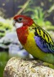 Plumage varié d'un oiseau photos libres de droits