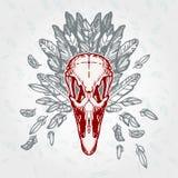 Plumagem envelhecida vintage do crânio da avestruz Foto de Stock Royalty Free