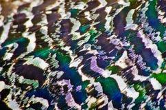 Plumaje como fondo natural Foto de archivo libre de regalías