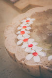 Plumaria or Frangipani flowers floating on the water Royalty Free Stock Photo