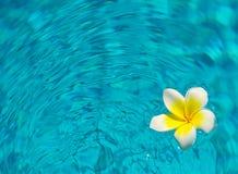 Plumaria op water royalty-vrije stock afbeelding