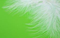plumas Imagen de archivo libre de regalías