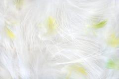 Plumas Foto de archivo libre de regalías