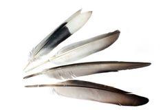 plumas Foto de archivo