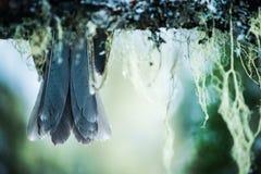 plumas Fotografía de archivo