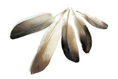 plumas Fotos de archivo