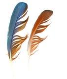 plumas Fotos de archivo libres de regalías