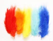 Plumas amarillas, azules, rojas multicoloras Imágenes de archivo libres de regalías