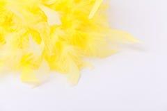 Plumas amarillas en el fondo blanco Foto de archivo libre de regalías