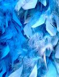Plumas azules Imágenes de archivo libres de regalías