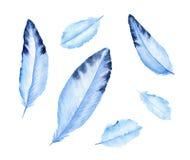 Plumas azules lindas Pluma de Birds' Ilustración de la acuarela