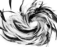 Plumas blancos y negros Imagen de archivo libre de regalías