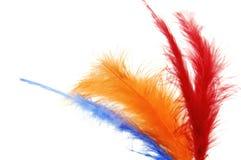 Plumas coloreadas Foto de archivo libre de regalías