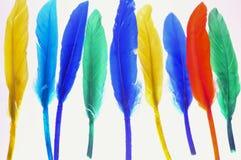 Plumas coloreadas Fotografía de archivo libre de regalías