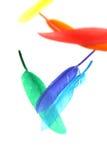 Plumas coloridas Imagen de archivo