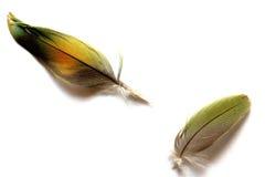 Plumas coloridas Imagen de archivo libre de regalías