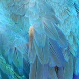 Plumas coloridas, característica como textura del fondo Imagenes de archivo
