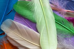 Plumas coloridas fotos de archivo
