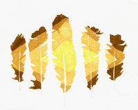 Plumas de la arena Fotos de archivo libres de regalías