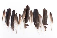 Plumas de la paloma Imagen de archivo libre de regalías