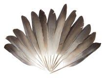 Plumas de la paloma fotografía de archivo libre de regalías