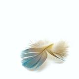 Plumas de pájaro Fotografía de archivo libre de regalías